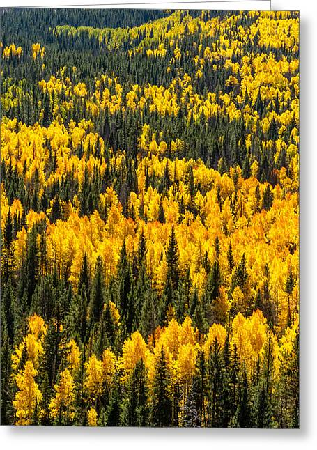 Scenic Drive Greeting Cards - Nature in Yellow and Green Greeting Card by Teri Virbickis