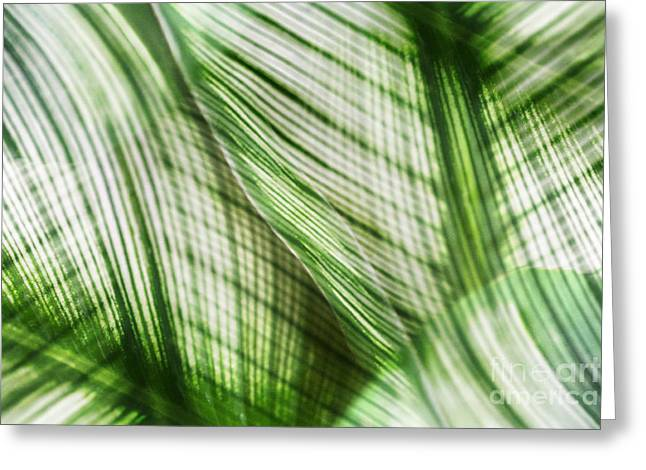 Bathroom Prints Greeting Cards - Nature Leaves Abstract in Green Greeting Card by Natalie Kinnear
