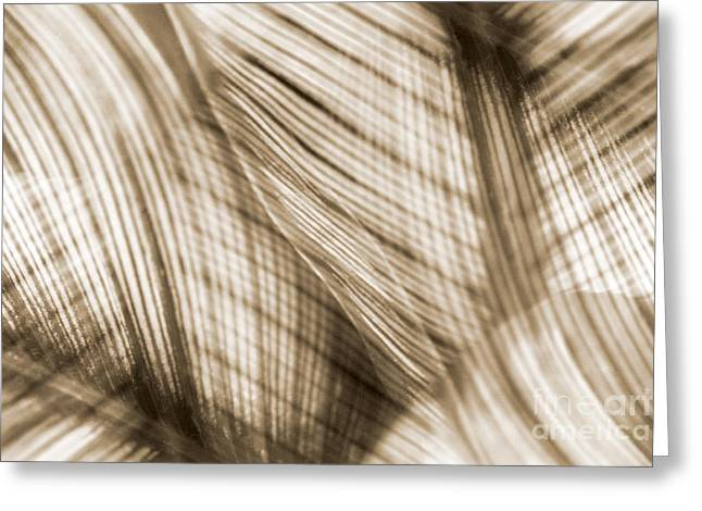 Sun Room Digital Art Greeting Cards - Nature Leaves Abstract in Sepia Greeting Card by Natalie Kinnear