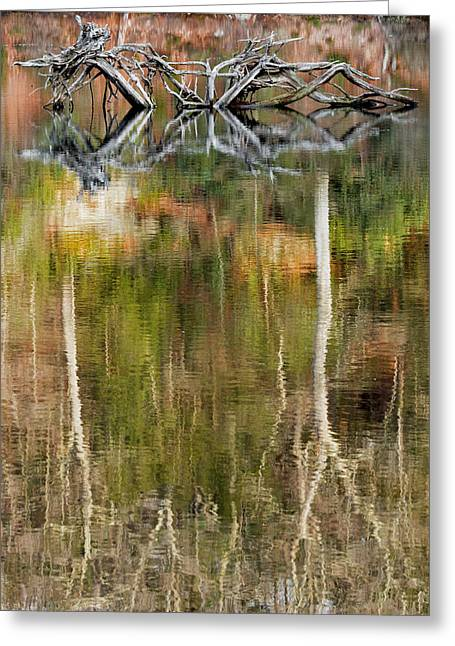 Beaver Greeting Cards - Nature Made Portrait Greeting Card by Bill  Wakeley