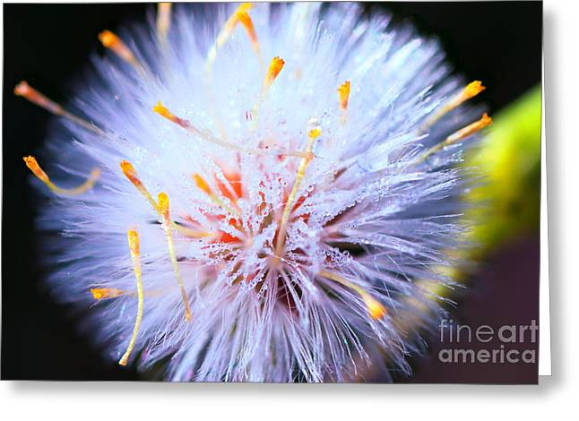 Close Focus Nature Scene Greeting Cards - Nature microscopic world beauty Greeting Card by Gregory DUBUS