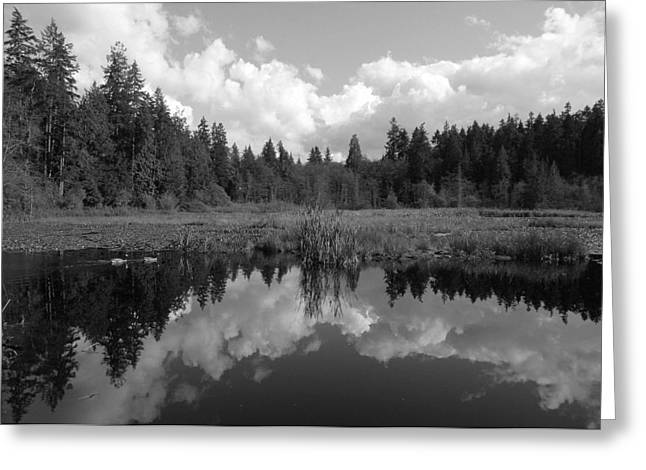 Beaver Lake Photographs Greeting Cards - Nature Mirrored Greeting Card by Brian Chase