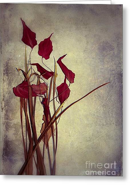Nature Morte Greeting Cards - Nature Morte du Moment  01 - pr03 Greeting Card by Variance Collections