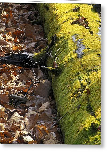 South-east Greeting Cards - Nature Moss Greeting Card by Anonymous