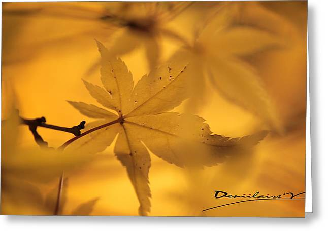 Lumiere Greeting Cards - Nature-or Greeting Card by Deniilaire Vinet