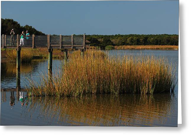 Marsh Scene Greeting Cards - Nature Paparazzi Greeting Card by Suzanne Gaff