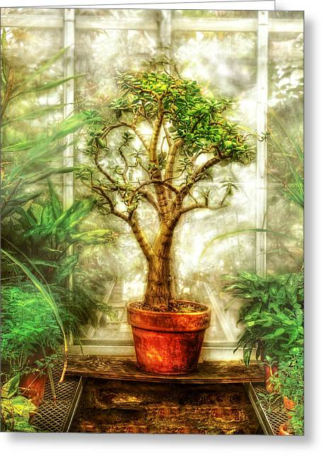 Window Of Life Greeting Cards - Nature - Plant - Tree of life  Greeting Card by Mike Savad