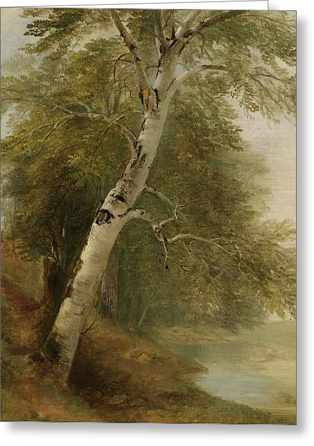 Beside Greeting Cards - Nature Study   A Birch Tree Greeting Card by Asher Brown Durand