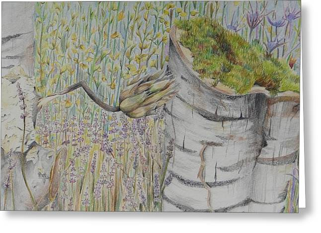 Moss Green Drawings Greeting Cards - Nature Study Italy Greeting Card by Diana J Jones