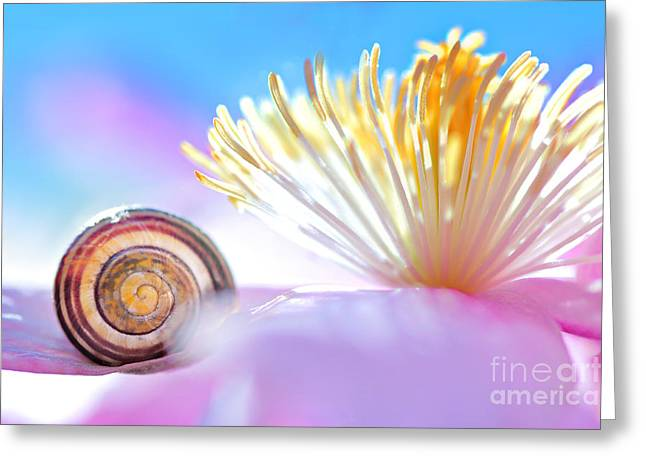 Close Focus Nature Scene Greeting Cards - Nature symbol with Clematis flower Greeting Card by Gregory DUBUS