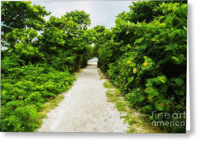 Bahia Honda State Park Greeting Cards - Nature Trail Greeting Card by Raul Rodriguez