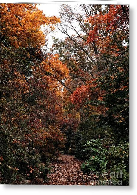 Nature Walk Greeting Cards - Nature Walk Greeting Card by John Rizzuto