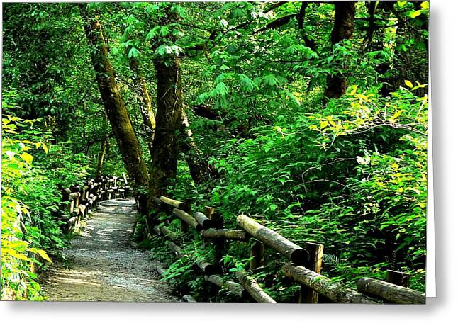 Tia Marie Mcdermid Greeting Cards - Nature Walk Greeting Card by Tia Marie McDermid