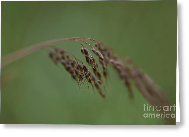 Nature Whisper.. Greeting Card by Nina Stavlund