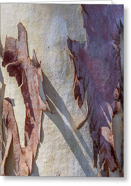 Pealed Greeting Cards - Natures Abstract Greeting Card by Ernie Echols