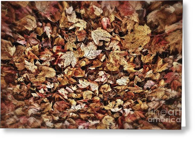 Fall Colors Greeting Cards - Natures Abstract of Fall Leaves Greeting Card by Lee Craig