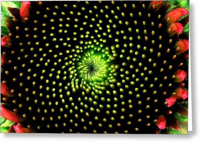 Abstracted Coneflowers Greeting Cards - Natures Abstracts 003 Greeting Card by George Bostian
