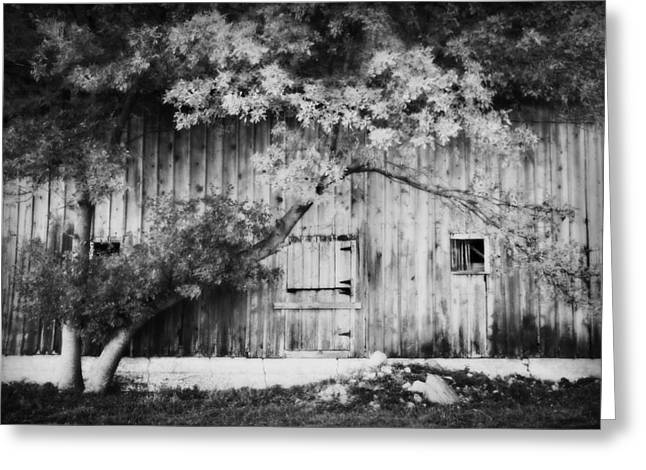 Natures Awning BW Greeting Card by Julie Hamilton