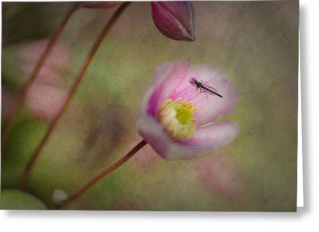 Garden Insects Greeting Cards - Natures Beauties Greeting Card by Constance Fein Harding