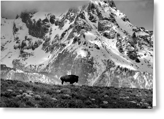 Black Top Greeting Cards - Natures Beauty Greeting Card by Dan Sproul