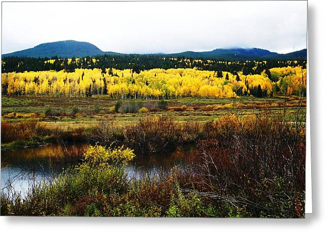 Natures Brilliant Palette Greeting Card by Dale Jackson
