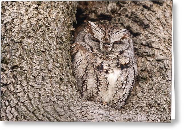 Morph Greeting Cards - Natures Camouflage Right by James Figielski Greeting Card by Paulinskill River Photography