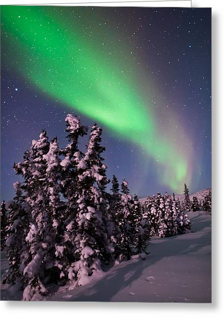 Snowy Night Night Greeting Cards - Natures Canvas In The Northern Sky Greeting Card by Mike Berenson