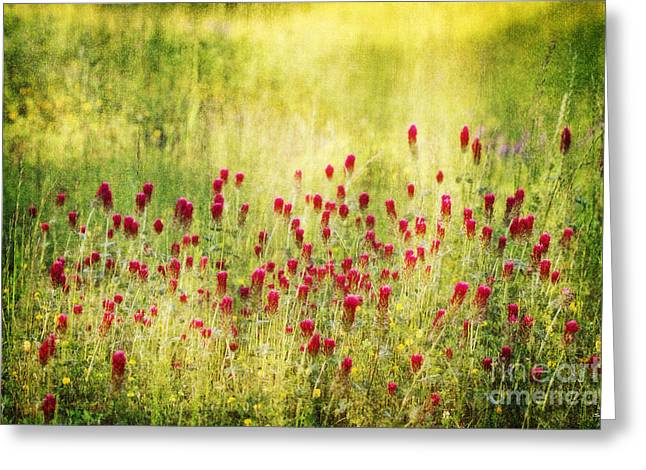 Nature's Canvas Greeting Card by Scott Pellegrin