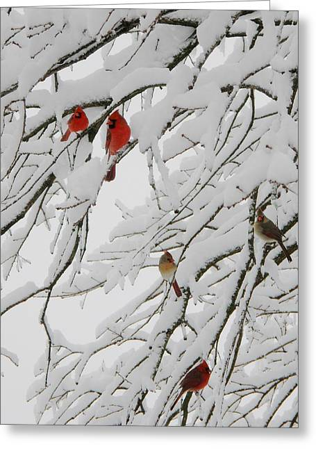 Shannon Story Greeting Cards - Natures Christmas Ornaments Greeting Card by Shannon Story