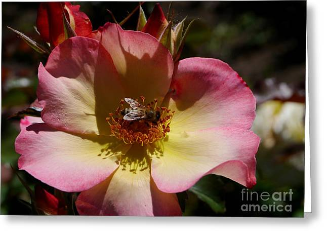 Yelllow Greeting Cards - Natures Color Palette Greeting Card by Christiane Schulze Art And Photography