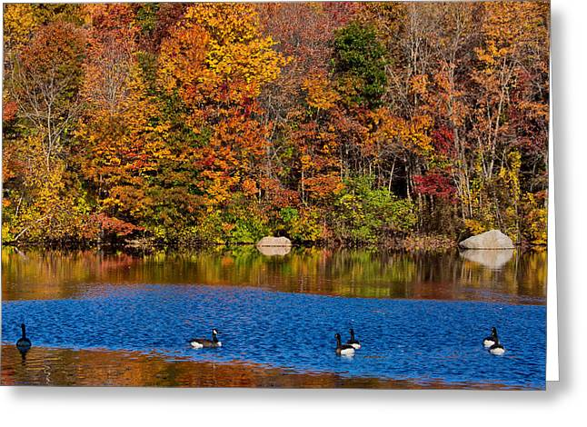 New England Color Greeting Cards - Natures Colorful Autumn Greeting Card by Karol  Livote