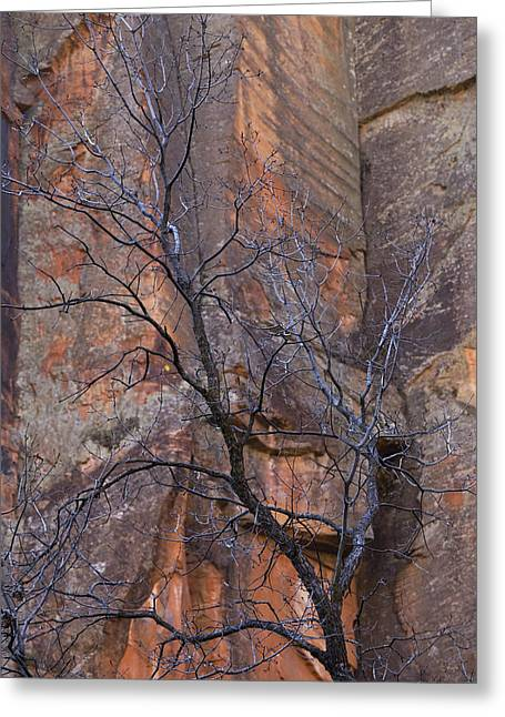 West Fork Greeting Cards - Natures Contrast Greeting Card by Sue Cullumber