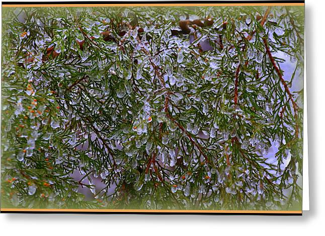 Branches Greeting Cards - Natures Crystals Greeting Card by Lisa Wooten