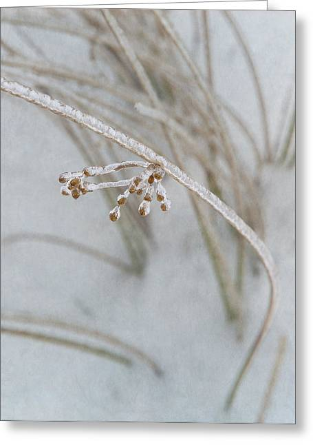 Fine Jewelry Greeting Cards - Natures Fine Jewelry Greeting Card by Angie Vogel