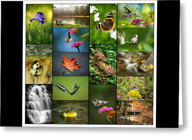 Nature's Finest Greeting Card by Christina Rollo