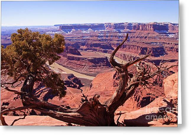 Southern Utah Greeting Cards - Natures Frame - Dead Horse Point Greeting Card by Bob and Nancy Kendrick