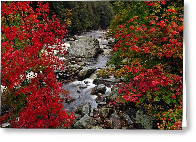 Leaf Change Greeting Cards - Natures Frame Greeting Card by Mark Papke