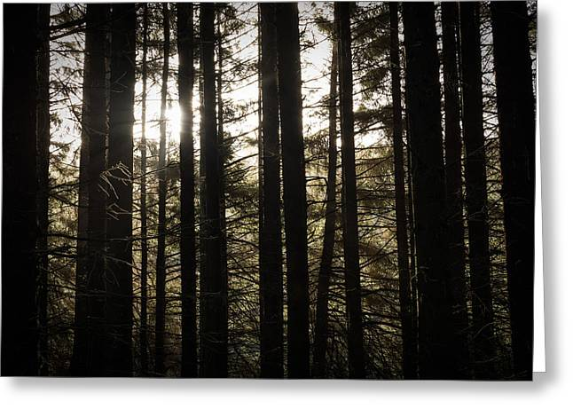 Walk Greeting Cards - Natures Gift. Greeting Card by Daniel Kay