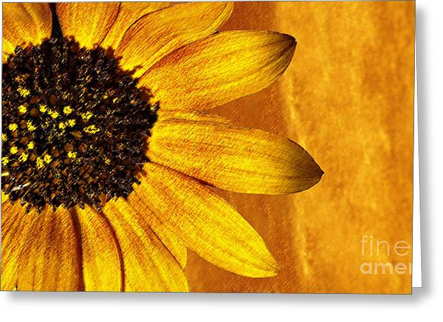 Nature Center Greeting Cards - Natures Gold Greeting Card by Candy Frangella