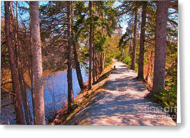 Natures Highway Greeting Card by John Malone