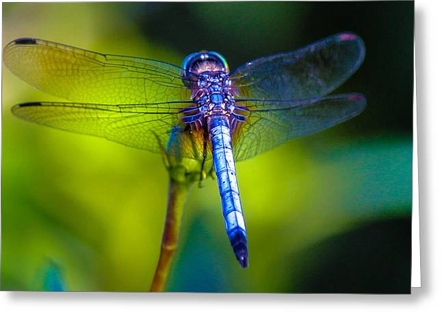Natures Jewels Greeting Card by Lesley Brindley