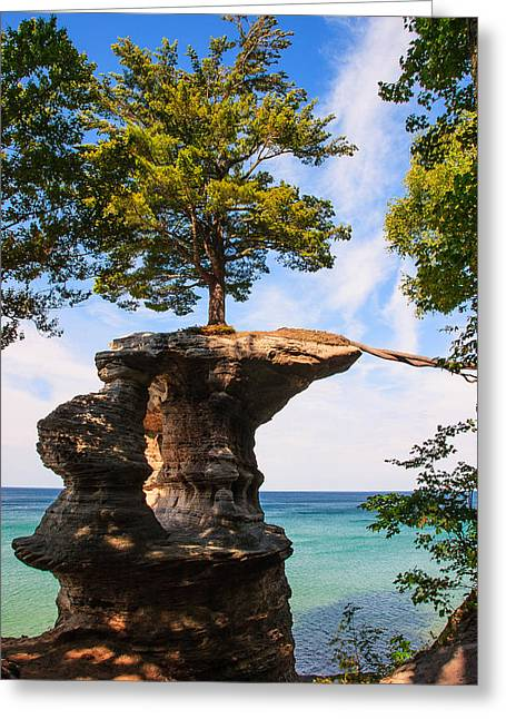 Tree Roots Greeting Cards - Natures Lifeline  Greeting Card by James Marvin Phelps