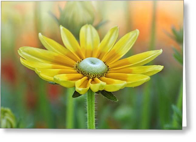 Pamela Parton Photography Greeting Cards - Natures Light Greeting Card by Pamela Parton