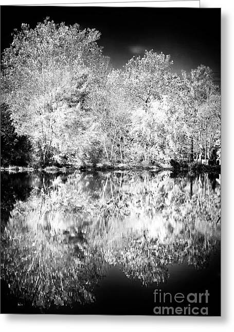 New Jersey Pine Barrens Greeting Cards - Natures Mirror Greeting Card by John Rizzuto