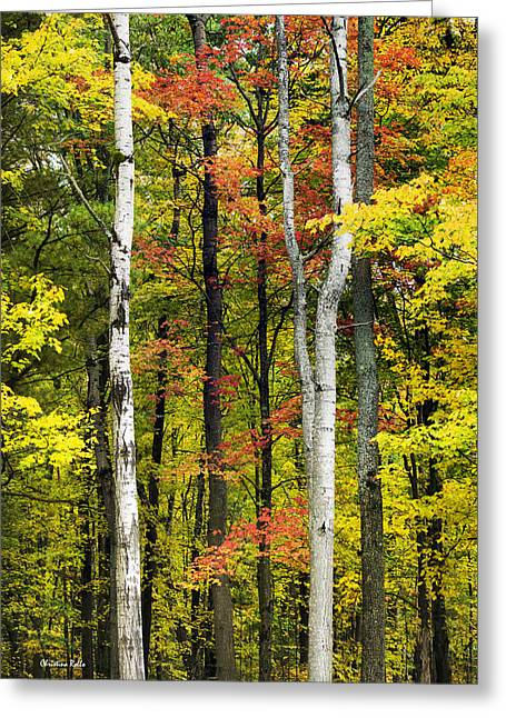 Vivid Color Palette Greeting Cards - Natures Palette Greeting Card by Christina Rollo