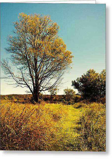 Grassy Field Greeting Cards - Natures Pathway Greeting Card by Christina Rollo