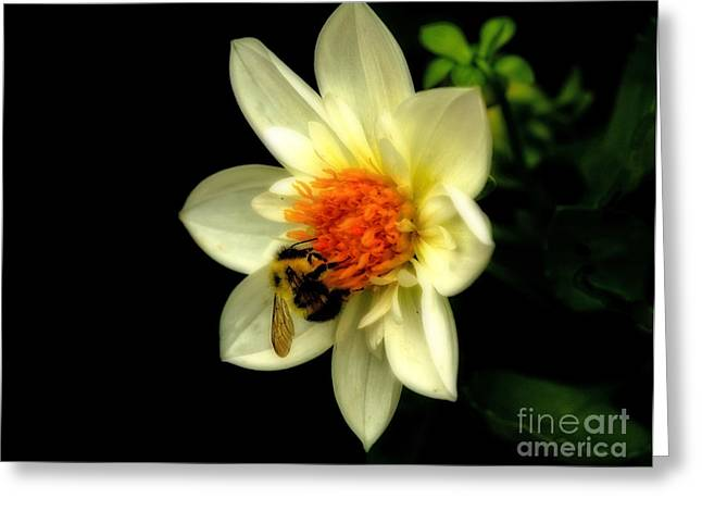 Natures Pollinator Greeting Card by Inspired Nature Photography Fine Art Photography