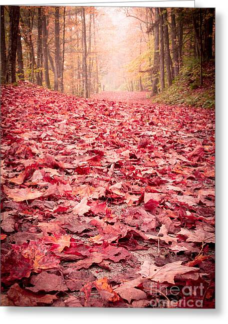 Sugar Maple Greeting Cards - Natures Red Carpet Revisited Greeting Card by Edward Fielding
