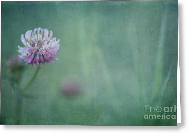 Pale Pink Greeting Cards - Natures Scent Greeting Card by Priska Wettstein