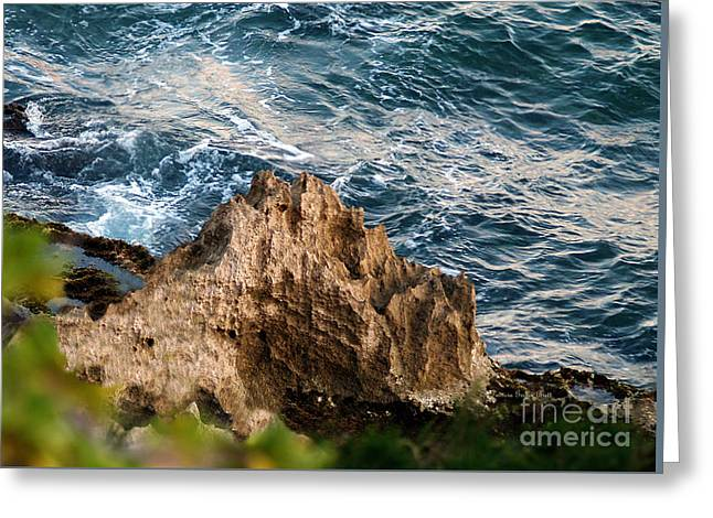 Lithified Greeting Cards - Natures Sculptures IV Greeting Card by Patricia Griffin Brett